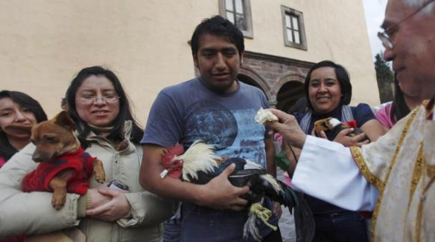 animaux benis mexique