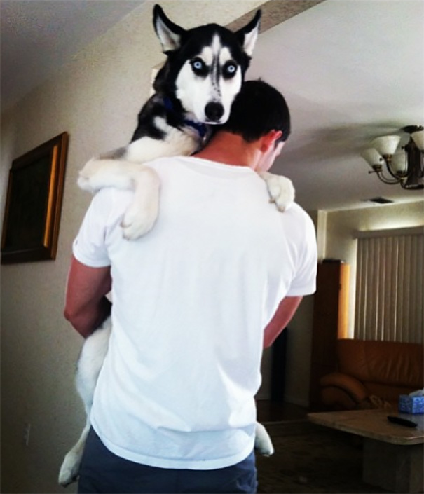 Mike et son Husky 2